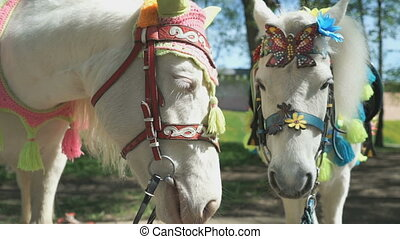 Two horses as called pony. Close up - Two horses as called...