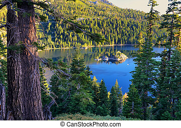 Pine forest surrounding Emerald Bay at Lake Tahoe,...