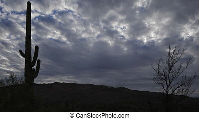 Timelapse of the Sonoran Desert in moonlight - A Timelapse...