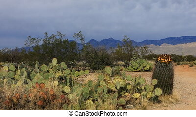 Timelapse of the Sonoran Desert - A Timelapse of the Sonoran...
