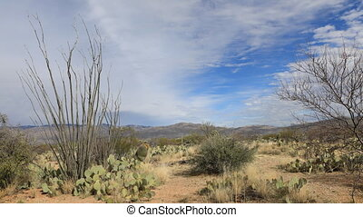 Timelapse of the Sonoran Desert and Octillo - A Timelapse of...