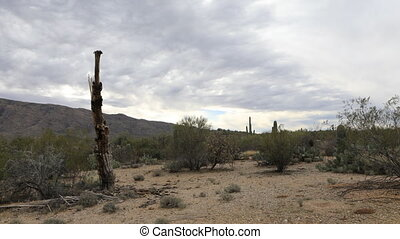 Timelapse of the Sonoran Desert and cactus skeleton - A...