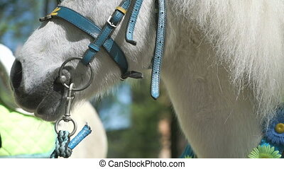 White little horse as called pony stands in park - White...