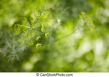 Blurred abstract background - fennel seeds