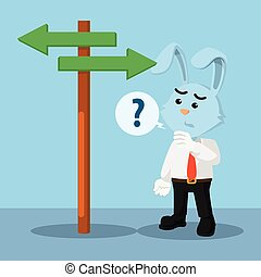 business rabbit confused choosing a way