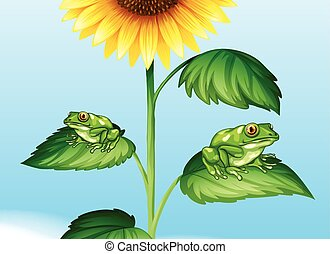 Two green frogs on sunflower tree