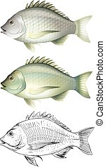 Different drawing of the same fish illustration