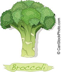 Broccoli vector isolated