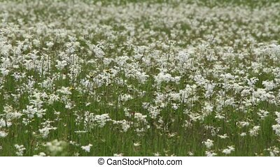 Field of green grass and wild flowers
