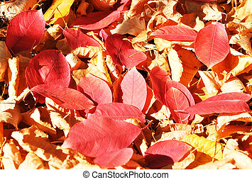 otoño, fondos