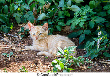 Feral Cat sitting in the shadow of a bush at Hanauma Bay on...