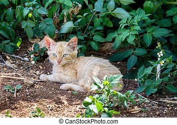 Feral Cat sitting in the shadow of a bush at Hanauma Bay on...
