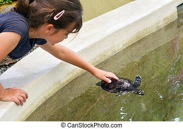 Tartaruga, mare, bambino, hawksbill, ragazza, Figi,...