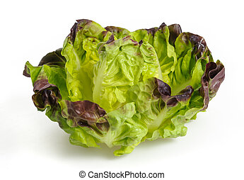 fresh lettuce salad isolated on white background
