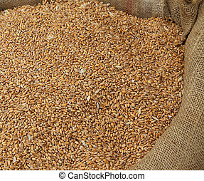 ripe wheat seeds for sale to the cereals and grain market -...