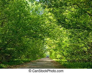 Canopy of tree branches - Green canopy over a footpath in an...