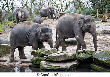 Elephant family goes to the watering hole in the forest of...