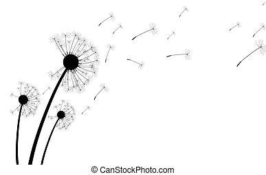 White background with dandelions. - White background with...