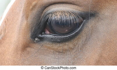 Close up view of the eye of a beautiful brown horse. Equine...