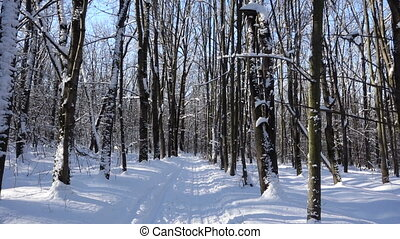 moving on ski road in winter forest - moving forward on ski...