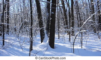 winter forest landscape with snow on trees and turn