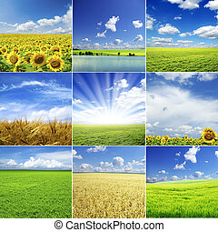 landscape - field on a background of the blue sky
