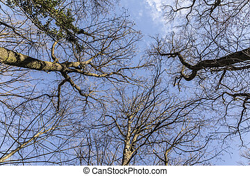 treetop in the winter forest under blue sky