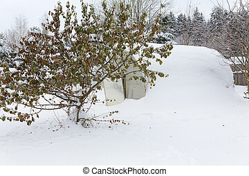 tree with leaves dotted with snow