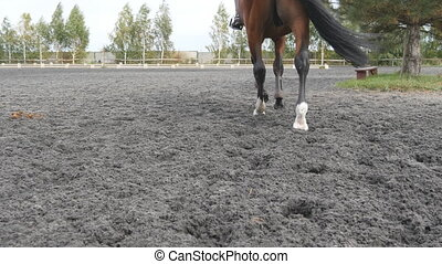 Foot of horse walking on the sand. Close up of legs going on...