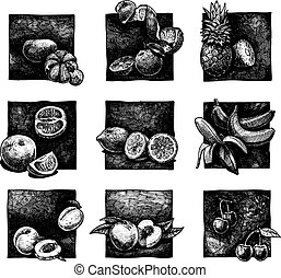 set of citrus and fruits - Vector ink hand drawn set of...