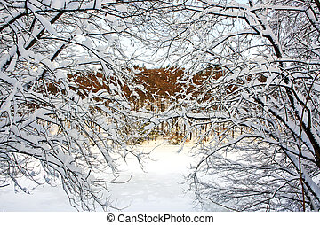 Trees with snow in winter .