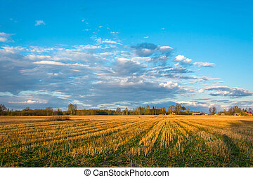 Yellow-orange sloping field. - Yellow-orange sloping field...