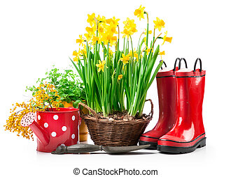Spring flowers narcissus in basket with branch