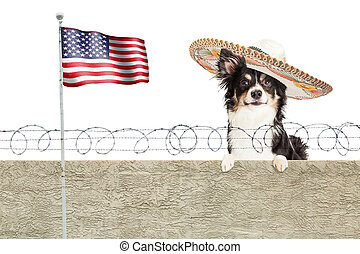 Mexican Chihuahua Dog Over Border Fence - Funny conceptual...
