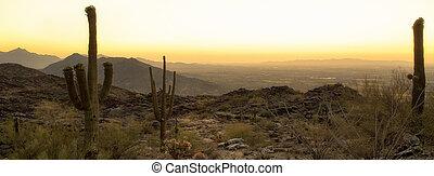 Phoenix Arizona Desert Horizontal Banner