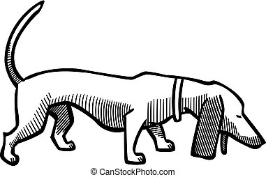 Dachsund Sniffing - Vector illustration a dachsund dog...