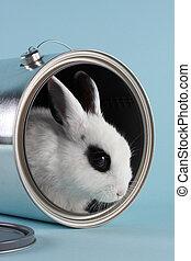 rabbit in a paint bucket - rabbit in a empty paint bucket...