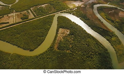 Mangrove forest in Asia. Philippines Catanduanes island. -...