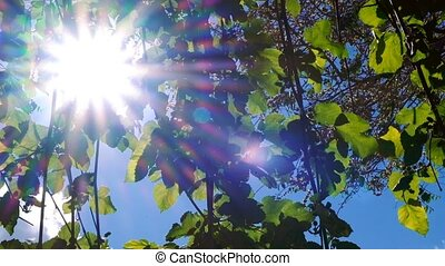 Bright ethereal spring leaves background with a misty sun...