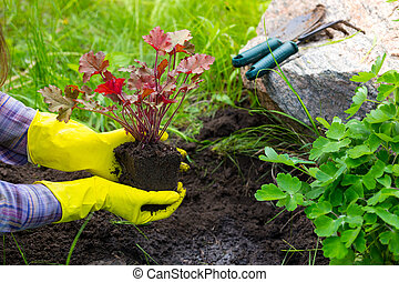 Planting in the garden - Girl is engaged in planting flowers...