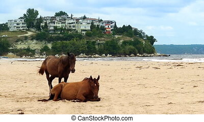 Pair of horses on beach - Pair of horses on sandy beach...
