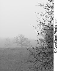 Monochrome trees on foggy morning - Monochrome rural trees...
