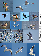 Many water birds in collage