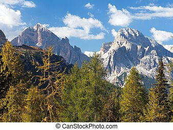 Larch wood and Le Tofane Gruppe, Dolomiti, Italy - View of...