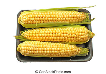 Corn cob sweetcorn ready for cooking isolated on white