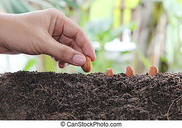 Man hands planting seeds into the ground. - Man hands...