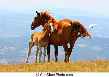 Beautiful red horses in mountains