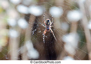 Spider and his Web