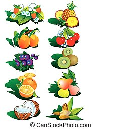 Fruits and nuts. - Various nice fruits and nuts.