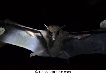 Bats researching in the field of night